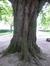 Marronnier commun – Schaerbeek, Parc Josaphat, Avenue Voltaire –  11 Mai 2017