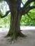 Marronnier commun – Schaerbeek, Parc Josaphat, Avenue Voltaire –  17 Mai 2017