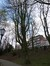 Marronnier commun – Schaerbeek, Parc Josaphat, Avenue Général Eisenhower –  25 Mars 2014