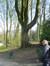 Witte paardenkastanje – Schaarbeek, Josaphatpark –  25 Maart 2014