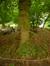 Cornouiller mâle – Schaerbeek, Parc Josaphat –  14 Mai 2014