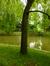 Tulipier de Virginie – Schaerbeek, Parc Josaphat –  14 Mai 2014