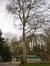 Platane à feuille d'érable – Schaerbeek, Parc Josaphat –  17 Mars 2014