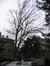 Charme commun – Saint-Gilles, Jardin de l'ancienne propriété Robie, Rue Saint-Bernard, 74 –  25 Janvier 2007