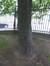 Oostenrijkse eik – Sint-Joost-Ten-Node, Kruidtuinpark –  09 Mei 2014