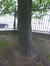 Chêne de Turner – Saint-Josse-Ten-Noode, Jardin Botanique –  09 Mai 2014