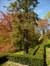 Sapin du Colorado – Uccle, Ancienne propriété Buyssens, Avenue Fond'Roy, 77 –  10 Avril 2014