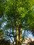 Charme commun – Uccle, Ancienne propriété Buyssens, Avenue Fond'Roy, 77 –  10 Avril 2014