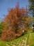 Hêtre pourpre – Uccle, Ancienne propriété Buyssens, Avenue Fond'Roy, 77 –  10 Avril 2014