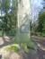 Hêtre pourpre – Uccle, Parc Fond'Roy –  16 Mars 2017