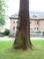 Mammoetboom – Ukkel, IRSApark, Waterlose Steenweg, 1504 –  14 September 2012