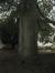 Hêtre pourpre – Uccle, Avenue de la Petite Espinette, 16 –  21 Juin 2007