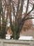 Hêtre pourpre – Uccle, Chaussée d'Alsemberg, 1156 –  01 Janvier 1999