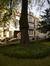 Tilleul argenté pleureur – Uccle, Chaussée d'Alsemberg, 602 –  29 Octobre 2013