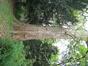 Platane à feuille d'érable – Uccle, Parc Raspail, parc –  05 Novembre 2003
