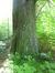Châtaignier – Uccle, Parc de Wolvendael, parc –  13 Mai 2016