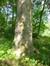 Hêtre pourpre – Uccle, Parc de Wolvendael –  13 Mai 2016