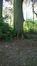 Hêtre pourpre – Uccle, Parc de Wolvendael –  04 Mai 2016