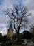 Tilleul à larges feuilles – Watermael-Boitsfort, Abords de l'église Saint-Clément, Rue du Loutrier –  21 Février 2014
