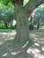 Erable de Verhaeghe – Watermael-Boitsfort, Parc du Jagersveld, parc –  24 Août 2017