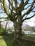 Hêtre pourpre – Watermael-Boitsfort, Chaussée de La Hulpe, 181 –  19 Avril 2013