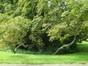 Witte paardenkastanje – Watermaal-Bosvoorde, Royale Belge Park , Vorstlaan, 25 –  23 August 2012