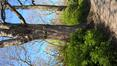 Erable argenté – Watermael-Boitsfort, Parc Tenreuken, Boulevard du Souverain –  22 Avril 2021