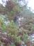 Cyprès chauve de Louisiane – Watermael-Boitsfort, Parc Tenreuken, Boulevard du Souverain –  04 Novembre 2015