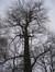 Tulpenboom – St.- Lambrechts - Woluwe, Eigendom Voot, Vootstraat, 67 –  10 Januari 2010