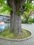 Marronnier commun – Woluwé-Saint-Lambert, Ancienne propriété Floralies, Rue des Floralies, 17 –  13 Avril 2017