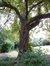 Marronnier commun – Woluwé-Saint-Pierre, Avenue Grandchamp, 213 –  28 Août 2012