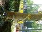 Magnolier de Soulange – Woluwé-Saint-Pierre, Avenue Orban, 22 –  08 Mai 2013