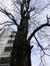 Gewone acacia – St.- Pieters - Woluwe, Tervurenlaan, 268 –  07 November 2012