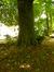 Hêtre d'Europe – Woluwé-Saint-Pierre, Parc Parmentier, Avenue Edmond Parmentier –  14 Mai 2014