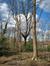Chêne pédonculé – Woluwé-Saint-Pierre, Parc Parmentier –  13 Avril 2021