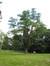 Robinier faux-acacia – Woluwé-Saint-Pierre, Parc Parmentier, parc –  03 Août 2007