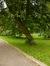 Aulne à feuilles cordées – Woluwé-Saint-Pierre, Parc de Woluwe –  08 Septembre 2013
