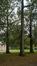 Chêne à cupules chevelues