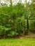 Peuplier baumier de l'Est – Woluwé-Saint-Pierre, Parc de Woluwe –  08 Septembre 2014