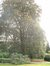 Hêtre pourpre – Bruxelles, Domaine du Mont Saint-Alban, Avenue Jean Sobieski, 9-11 –  02 Octobre 2006