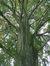 Hêtre pourpre – Forest, Domaine de la Magnanerie, Avenue Minerve, 39 –  21 Septembre 2017