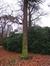 Araucaria du Chili – Forest, Avenue de Haveskercke, 78/84 –  19 Novembre 2008