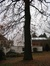 Chêne pédonculé – Forest, Avenue de Haveskercke, 78/84 –  19 Novembre 2008