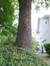 Chêne pédonculé – Forest, Avenue Besme, 72 –  25 Septembre 2014