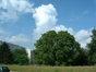 Noyer royal – Woluwé-Saint-Pierre, Chaussée de Stockel, 500 –  12 Août 2002