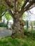 Cerisier du Japon – Woluwé-Saint-Lambert, Ancienne propriété Floralies, Rue des Floralies, 17 –  13 Avril 2017