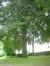 Hêtre pourpre – Schaerbeek, Square Vergote, Square Vergote, face 20 –  01 Juillet 2013
