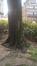 Acer platanoides f. rubrum, Place des Bienfaiteurs