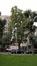 Ginkgo biloba 'Fastigiata' – Schaerbeek, Avenue Huart Hamoir et Square Riga, Avenue Huart Hamoir, 31-33 –  24 Septembre 2015