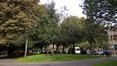 houx – Schaerbeek, Avenue Huart Hamoir et Square Riga, Avenue Huart Hamoir –  24 Septembre 2015